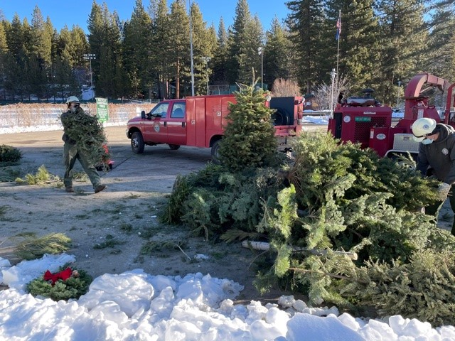 FREE HOLIDAY TREE RECYCLING PROGRAM
